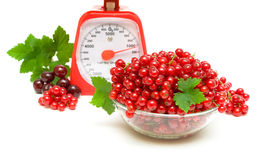 水多的红醋栗、厨房标度和樱桃在一白色backgr 免版税库存照片