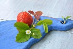 水多的草莓和开花的花在蓝色,木纹理关闭  图库摄影