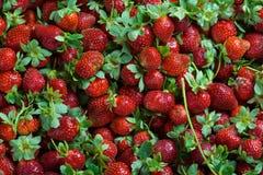 水多的草莓无缝的纹理 免版税库存图片