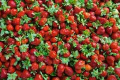 水多的草莓无缝的纹理 库存照片