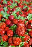 水多的草莓无缝的纹理 图库摄影