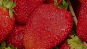 水多的草莓无缝的纹理 免版税库存照片