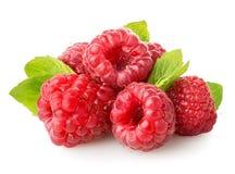 水多的莓 免版税库存图片