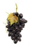 水多的葡萄 库存图片