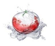 水多的蕃茄 图库摄影