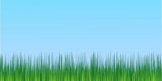 水多的绿草蓝天背景 皇族释放例证