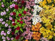 多种五颜六色的花 免版税库存图片