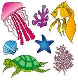 多种海生动物收藏2 免版税图库摄影