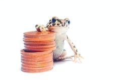 多种硬币和疯狂的青蛙堆  库存图片