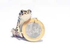 多种硬币和疯狂的青蛙 免版税库存照片