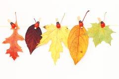 多种秋叶 免版税库存图片