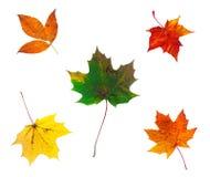 多种秋天综合充分的叶子照片范围 免版税图库摄影