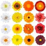 多种空白,黄色,桔子和红色 库存图片