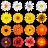 多种空白,黄色,橙色和红色花 免版税库存照片