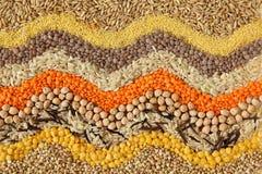 多种谷物种子 免版税库存图片