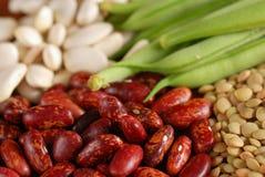 多种豆类型 免版税库存照片