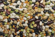 多种豆背景 库存图片