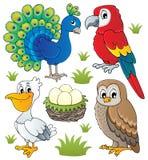 多种鸟主题设置了2 库存照片
