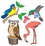 多种02只鸟收藏 库存图片