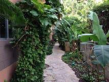 多米尼加共和国棕榈三绿色旅馆唐璜旅行旅馆植被植物群 库存图片