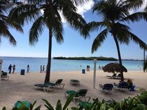 多米尼加共和国棕榈三绿色旅馆旅行旅馆植被植物群唐璜Boca奇卡天蓝色海沙人民 免版税图库摄影