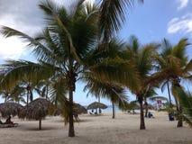 多米尼加共和国棕榈三绿色旅馆旅行旅馆植被植物群唐璜Boca奇卡海沙天蓝色 库存图片
