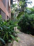 多米尼加共和国棕榈三绿色旅馆旅行旅馆植被植物群唐璜Boca奇卡海沙植物群 库存图片