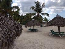 多米尼加共和国棕榈三绿色旅馆旅行旅馆植被植物群唐璜Boca奇卡海沙 免版税库存图片