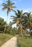多米尼加共和国的密林 免版税库存照片