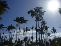 多米尼加共和国的棕榈树 免版税库存照片