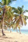 多米尼加共和国的海滩 图库摄影