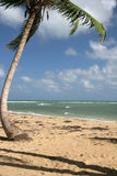 多米尼加共和国的las popy punta共和国terrenas 免版税库存照片
