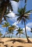 多米尼加共和国, Punta Cana 免版税库存照片