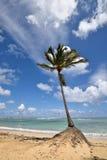 多米尼加共和国, Punta Cana 库存照片