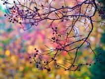 多色叶子和树 免版税库存照片