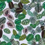 多色叶子样式无缝的浅灰色的背景 库存照片
