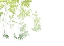 多色叶子背景 免版税库存图片