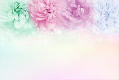 多色玫瑰在软的淡色背景, conceptsof Valentine& x27中; s天和婚礼邀请卡片 免版税库存图片