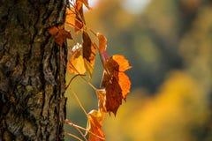 多色的秋叶 库存图片