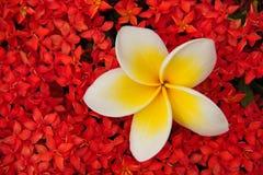 多色的花 库存照片