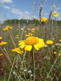 多色的草甸 库存照片