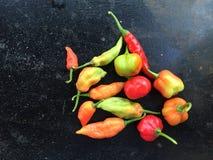 多色的辣椒在黑背景中 免版税库存照片