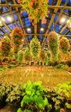 多色秋海棠在秋海棠庭院, Nabana里没有佐藤,米氏,日本 库存图片