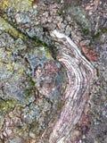 多节树纹理 图库摄影