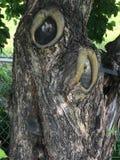 多节的树 免版税图库摄影
