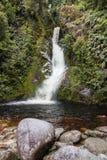 多萝西在湖Kaniere跌倒在新西兰 免版税库存照片