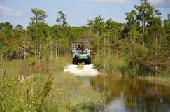 多虫的沼泽地使浏览陷入沼泽 库存照片