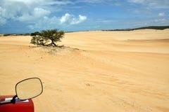 从多虫的镜子看见的沙丘 库存图片