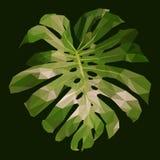 多角形绿色monstera叶子,被隔绝的多角形传染媒介植物 皇族释放例证