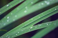 多雨叶子细节 免版税库存图片